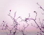 Pink Dawn Print by Ann Powell