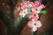 Cheerful Mixed Media Prints - Pink Dogwood Cascade Print by Andee Photography