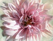 Flower Gardens Photos - Pink Dreams by Christine Belt