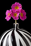 Vivid Colorful Flowers Prints - Pink English Primrose Print by Garry Gay