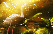 Buying Online Tapestries Textiles Posters - Pink Flamingo1 Poster by Benny  Woodoo