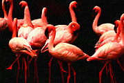 Dances Posters - Pink Flamingos . Painterly Poster by Wingsdomain Art and Photography