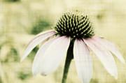 Julie Hamilton - Pink Flower