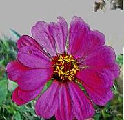 Pink Flower Print by Lisa  Ridgeway