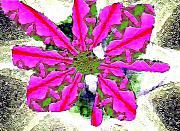 Pop Art Posters - Pink Flower Mutation Poster by Navo Art