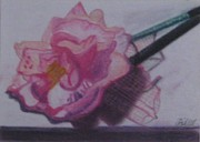 Pen Pastels Prints - Pink Flower Pen Print by Philippa Tisdell
