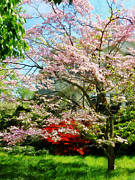 Azalea Posters - Pink Flowering Dogwood Poster by Susan Savad