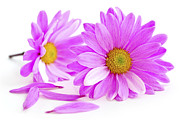 Element Photos - Pink flowers by Elena Elisseeva
