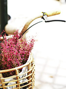 Bicycle Basket Prints - Pink Flowers In Bicycle Basket Print by Anna Ramon Photography