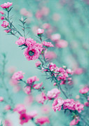 Pink Flower Branch Prints - Pink Flowers On Teal Print by Tina Lee Studio