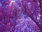 Free Form Photos - Pink Forest by Betty Northcutt