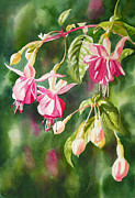 Watercolor Art Paintings - Pink Fuchsias by Sharon Freeman