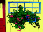 Pink Geraniums In Blue Windowbox - Paintograph Print by Christine S Zipps