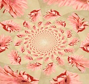 Kaleidoscope Framed Prints - Pink Gerber Kaleidoscope Framed Print by Cathie Tyler