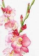 Gladiola Paintings - Pink Gladiola by Linda Hoover