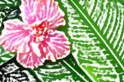 Pink Hibiscus Posters - Pink Hibiscus Poster by James Temple