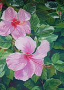 Tropical Art Pastels Prints - Pink Hibiscus Print by John Clark