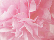Backgrounds Metal Prints - Pink Hollyhock Flower Metal Print by Sarah Cowan Photography