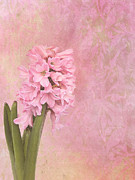 Hyacinth Photos - Pink Hyacinth by Viaina