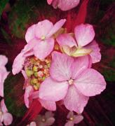 Decor Photography Mixed Media Posters - Pink Hydrangea Poster by Cathie Tyler