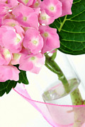 Blooming Pastels Framed Prints - Pink Hydrangea Flower in a Glass Vase Framed Print by Anne Kitzman