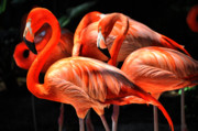 Flamingo Photos - Pink in Bow by Emily Stauring
