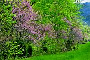 Flowering Trees Prints - Pink in Spring Print by Lyle  Huisken