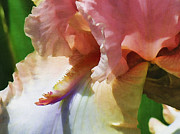 Iris Digital Art Prints - Pink Iris Print by Bonnie Bruno