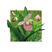 Pink Lady Slipper Print by JQ Licensing
