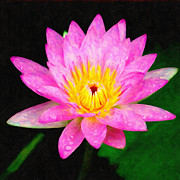 Multicolored Daisy Prints - Pink Lily Print by Chuck Mountain