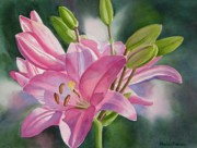 Watercolor  Paintings - Pink Lily with Buds by Sharon Freeman