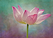 Digitally Enhanced Prints - Pink Lotus Blossom Print by Susan Candelario
