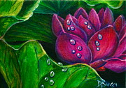 Good Luck Originals - Pink Lotus with Raindrops by Debra Bucci
