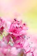Pink Magic Print by Sharon Johnstone