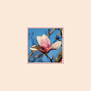 Southern Magnolia Posters - Pink Magnolia Photo Square Poster by Jai Johnson