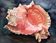 Sea Shell Painting Prints - Pink-mouthed Murex Print by Barbara Jewell
