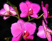 Pink Orchids Print by Dennis Lundell