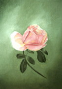Flower Still Life Prints Posters - Pink Peach 1 Rose Painting Flower Painting Art Print Poster by Sally Holt