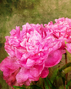 Bob And Nancy Kendrick Prints - Pink Peony Texture 3 Print by Bob and Nancy Kendrick