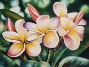 Plumeria Paintings - Pink Plumeria Cluster by Barbara Eberhart - Printscapes