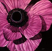 Photorealism Prints - Pink Poppy Print by Linda Hoard