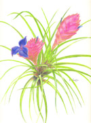 Epiphyte Art - Pink Quill by Penrith Goff