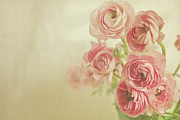 Soft Focus Art - Pink Ranunculus Bunch Of Flower by Photography by Angela - TGTG