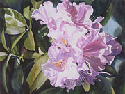 Watercolours Framed Prints - Pink Rhododendron Framed Print by Sharon Freeman