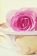 China Rose Prints - Pink Rose and Teacup Print by Kim Fearheiley