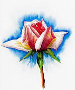 Pink Rose Print by Svetlana Sewell