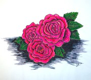 Roses Drawings - Pink Roses by A Neville