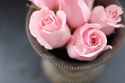 Alberta Photos - Pink Roses by Shawna Lemay