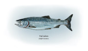 Game Drawings Prints - Pink Salmon Print by Ralph Martens