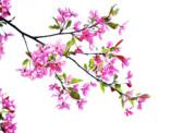 Pink Spring Print by Marilyn Hunt